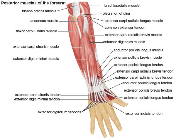 how to develop strong kegel muscles