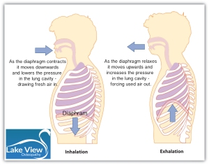 diaphragm breath